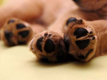Optimal care for  dog paws